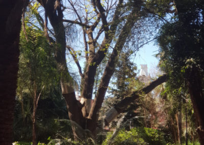 Bendigo garden walk