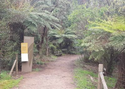 Walk through forest Dandenong Range