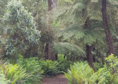 Forrest Dandenong Ranges