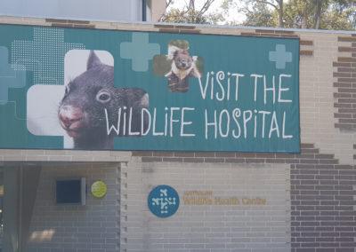 Visit the wildlife hospital