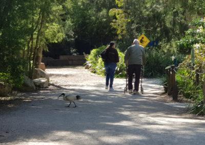 The walk at Healesville sanctuary