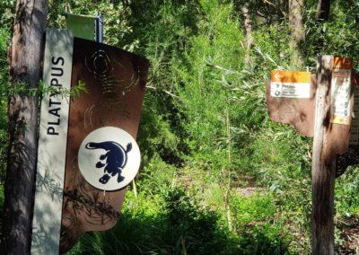 Platypus at Healesville wildlife park