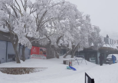 Trees covered in Snow Mt Buller village