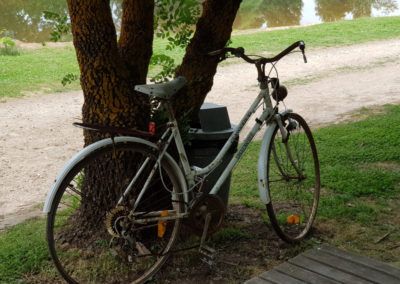Bicycle at Lavandula farm