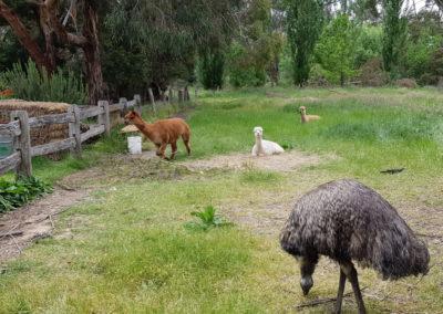 Animals at Lavandula Farm