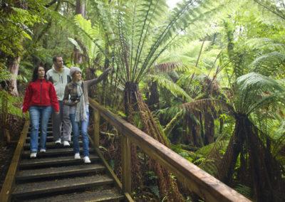 Walk through the forest Otway Fly Adventure