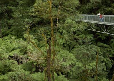 Treetop walk at Otway Fly Adventure