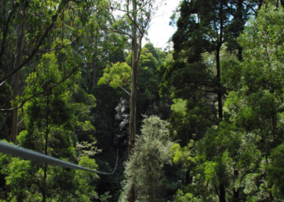 Zipping between trees at Otway Fly Adventure
