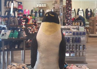 Penguin shop at Penguin parade