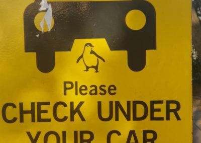 Check under car for Penguins at Penguin Parade