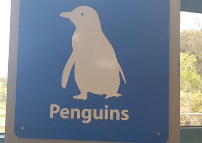Penguin warning on Phillip Island