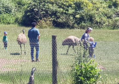 Emu's at Phillip Island Wildlife Park