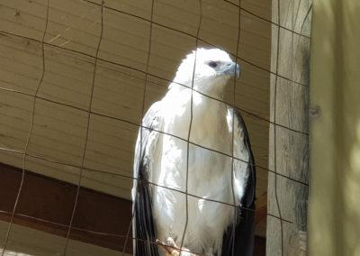 Eagle Wildlife park Phillip Island