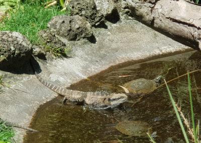 Dragon at wildlife park