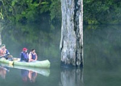 Looking for Platypus on Lake Elizabeth