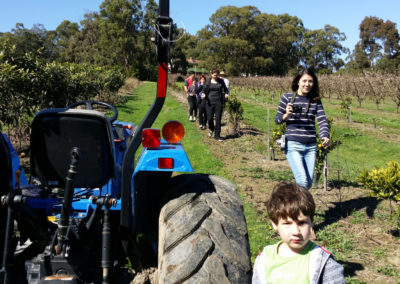 Fruit picking on Rayner's Orchard Tractor tour