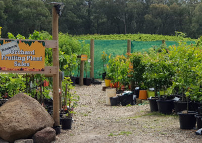 Orchard Fruiting Plant Sales