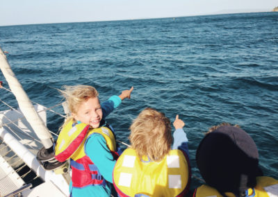 Looking for Dolphins in Port Phillip Bay