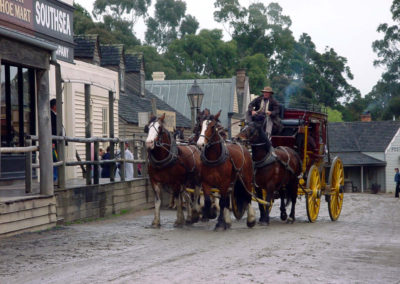 Horses at Sovereign hill