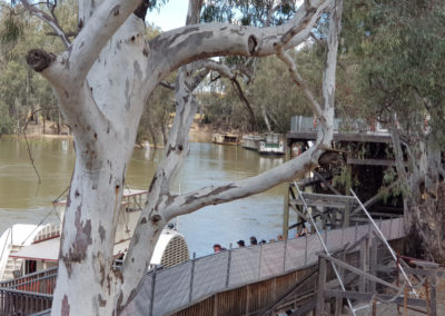 Many paddle steamer in Echuca