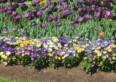 Flowers in Bendigo