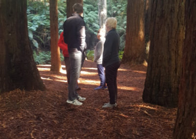 Admiring the view at the redwoods