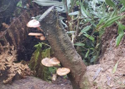 Mushroom at Hopetoun Falls