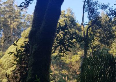 Trees Hopetoun Falls