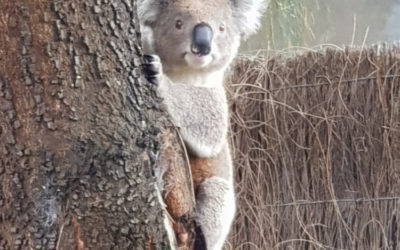 The best Australian Animals to see.